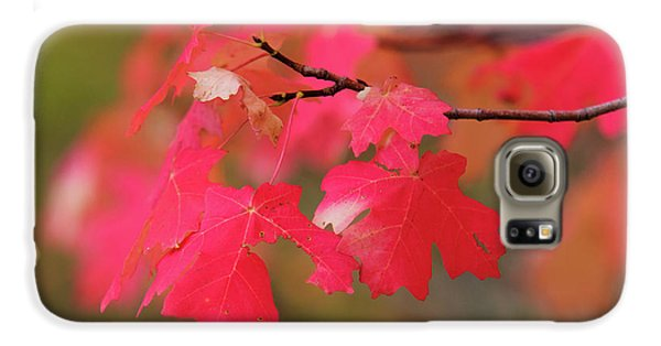 A Flash Of Autumn Galaxy S6 Case