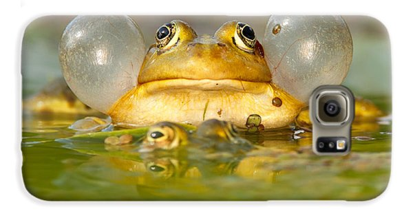 Amphibians Galaxy S6 Case - A Frog's Life by Roeselien Raimond