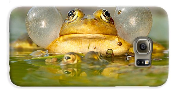 A Frog's Life Galaxy S6 Case by Roeselien Raimond