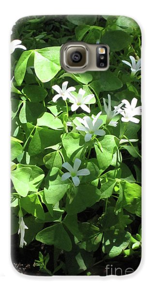 Galaxy S6 Case featuring the photograph A Lovely Spot For Shamrocks by Nancy Lee Moran