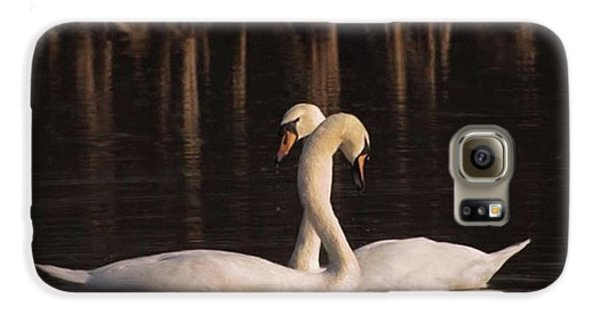 A Painting Of A Pair Of Mute Swans Galaxy S6 Case by John Edwards