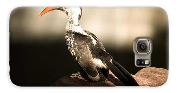 A Red-billed Hornbill At The Lincoln Galaxy S6 Case