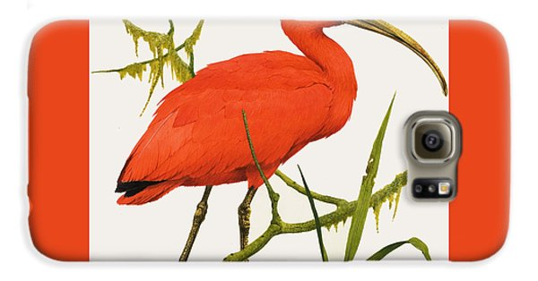 A Scarlet Ibis From South America Galaxy S6 Case by Kenneth Lilly