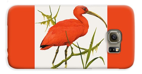 A Scarlet Ibis From South America Galaxy S6 Case