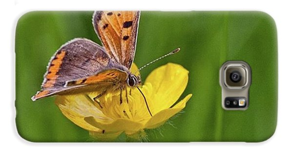 A Small Copper Butterfly (lycaena Galaxy S6 Case by John Edwards