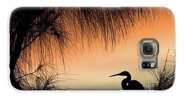 A Snowy Egret (egretta Thula) Settling Galaxy S6 Case