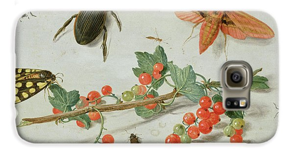 A Sprig Of Redcurrants With An Elephant Hawk Moth, A Magpie Moth And Other Insects, 1657 Galaxy S6 Case