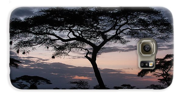 Acacia Trees Sunset Galaxy S6 Case