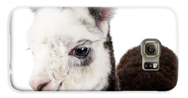 Adorable Baby Alpaca Cuteness Galaxy S6 Case by TC Morgan