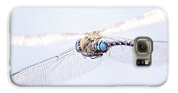 Aeshna Juncea - Common Hawker In Galaxy S6 Case by John Edwards