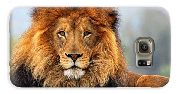 African Lion 1 Galaxy S6 Case