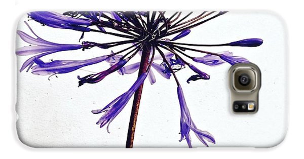 Galaxy S6 Case - Agapanthus 2 by Julie Gebhardt