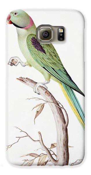 Alexandrine Parakeet Galaxy S6 Case