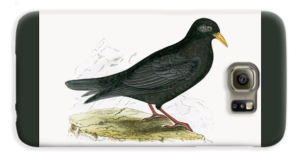Alpine Chough Galaxy S6 Case