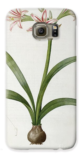 Amaryllis Vittata Galaxy S6 Case by Pierre Redoute