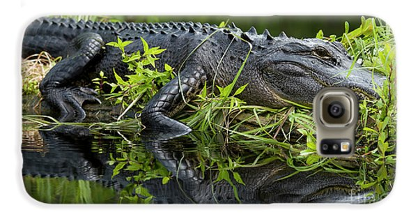 American Alligator In The Wild Galaxy S6 Case by Dustin K Ryan