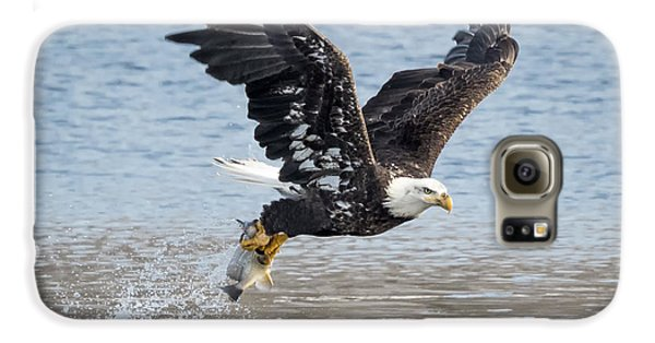 American Bald Eagle Taking Off Galaxy S6 Case by Ricky L Jones