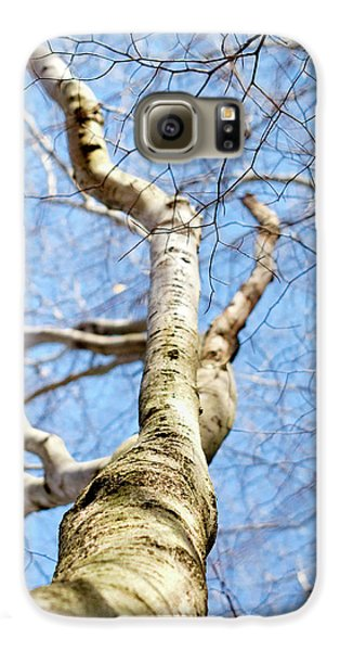 American Beech Tree Galaxy S6 Case by Christina Rollo