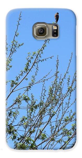 American Kestrel Atop Pecan Tree Galaxy S6 Case