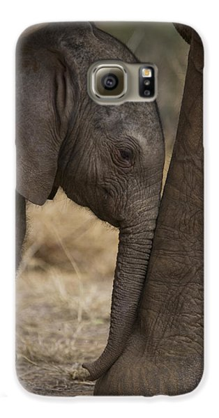 An Elephant Calf Finds Shelter Amid Galaxy S6 Case
