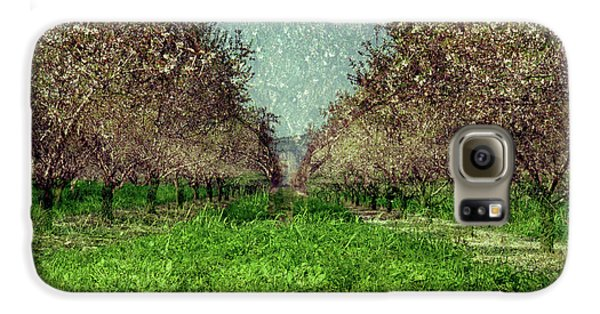 An Orchard In Blossom In The Eila Valley Galaxy S6 Case