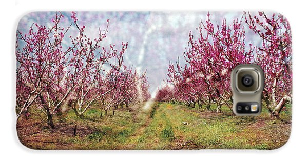 An Orchard In Blossom In The Golan Heights Galaxy S6 Case