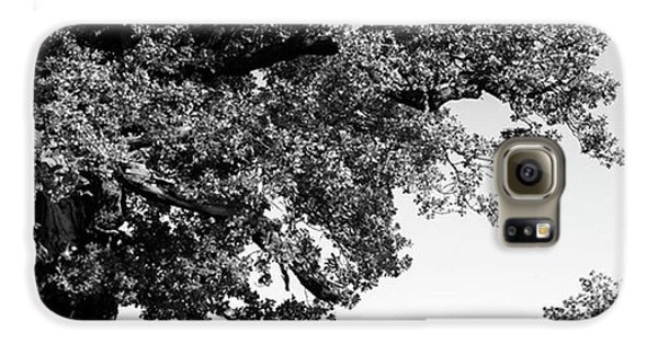 Ancient Oak, Bradgate Park Galaxy S6 Case