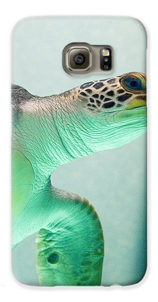 Reptiles Galaxy S6 Case - Angel 2 by Skip Hunt