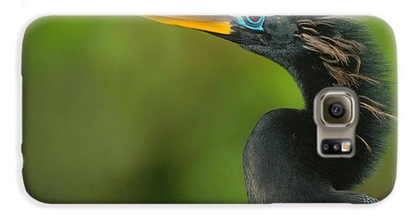Anhinga Anhinga Anhinga, Tortuguero Galaxy S6 Case by Panoramic Images