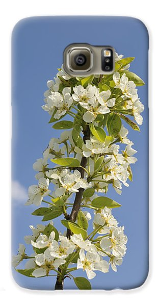 Apple Blossom In Spring Galaxy S6 Case