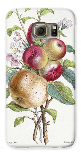 Apple Tree Galaxy S6 Case by JB Pointel du Portail