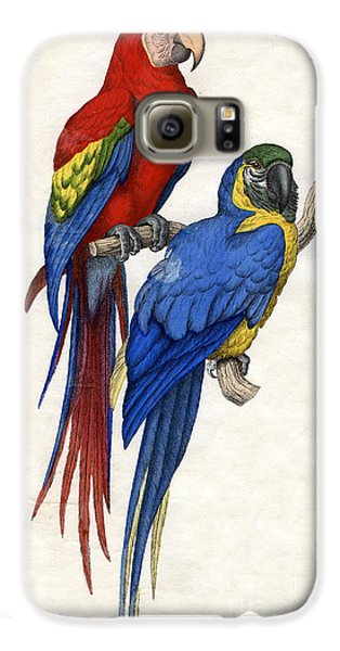Aracangua And Blue And Yellow Macaw Galaxy S6 Case