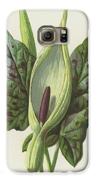 Cuckoo Galaxy S6 Case - Arum, Cuckoo Pint by Frederick Edward Hulme