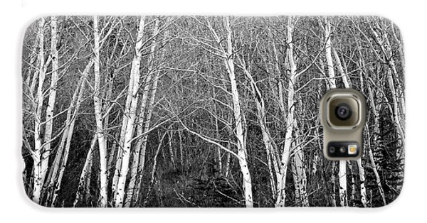 Aspen Forest Black And White Print Galaxy S6 Case by James BO  Insogna