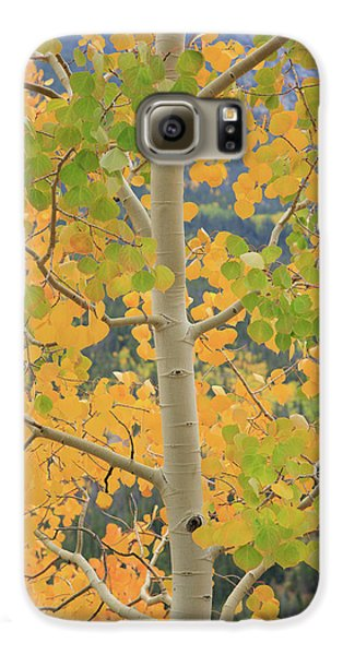 Galaxy S6 Case featuring the photograph Aspen Watching You by David Chandler