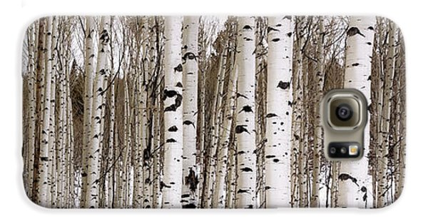 Mountain Galaxy S6 Case - Aspens In Winter Panorama - Colorado by Brian Harig