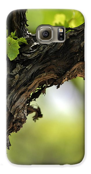 Galaxy S6 Case featuring the photograph At Lachish Vineyard by Dubi Roman