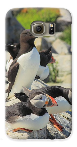 Atlantic Puffins And Razorbill Galaxy S6 Case by John Burk