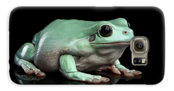 Australian Green Tree Frog, Or Litoria Caerulea Isolated Black Background Galaxy S6 Case