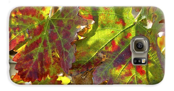 Galaxy S6 Case featuring the photograph Autumn At Lachish Vineyards 2 by Dubi Roman