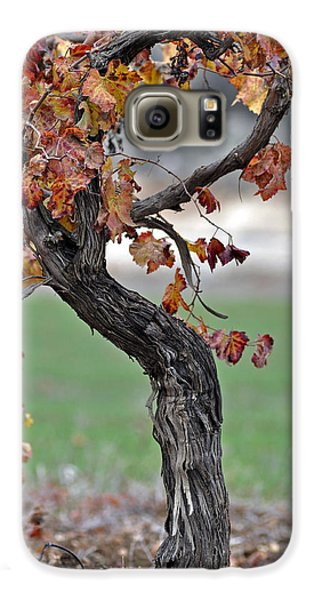 Galaxy S6 Case featuring the photograph Autumn At Lachish Vineyards 3 by Dubi Roman