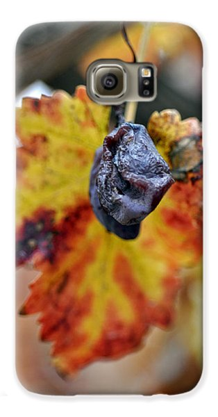 Galaxy S6 Case featuring the photograph Autumn At Lachish Vineyards 5 by Dubi Roman