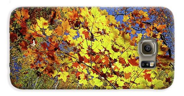 Autumn Light Galaxy S6 Case by Tatsuya Atarashi
