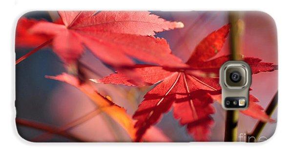 Autumn Maple Galaxy S6 Case