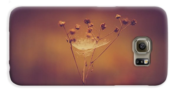 Autumn Web Galaxy S6 Case by Shane Holsclaw