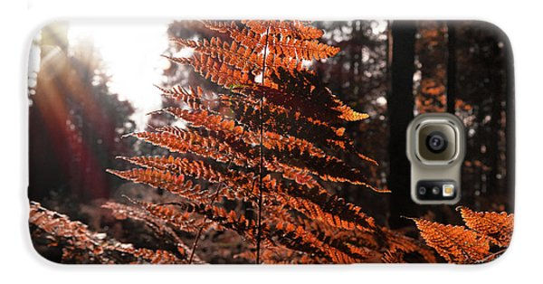 Autumnal Evening Galaxy S6 Case