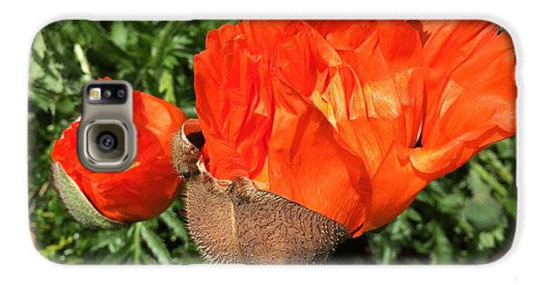 Galaxy S6 Case - Awakening Poppy by Orphelia Aristal