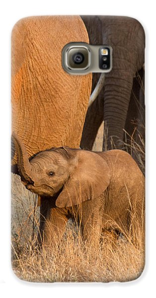 Baby Elephant 2 Galaxy S6 Case