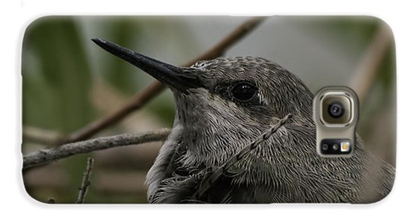 Baby Humming Bird Galaxy S6 Case