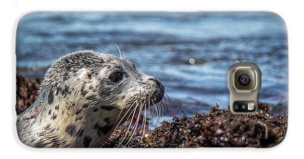 Baby Seal Galaxy S6 Case